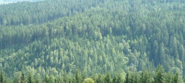 Government must refine the subsidy mechanism to reflect carbon storage potential of wood - comment by Norbord Europe